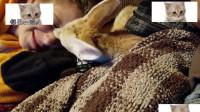 小狐狸偷偷亲了小女孩一口, 立刻害羞的躲进毯子里