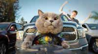 萌趣创意《世界上最听话的猫》