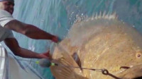 """深海钓鱼总有惊喜, 但没想到能钓上来这么大的""""怪物""""!"""