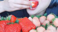 微笑姐吃两种颜色草莓, 白色难道还没有成熟吗? 没想到颠覆了认知!