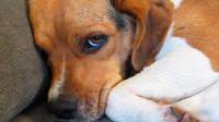 训狗越揍越不听话, 最容易忽视的原因, 一招扭转训狗方式