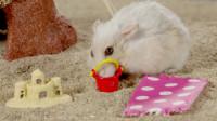仓鼠沙滩度假偶遇强盗, 为了保护食物操碎了心, 网友: 真是吃货