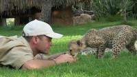小猎豹有多萌, 老外和小猎豹一起玩耍, 网友: 我也想要一只