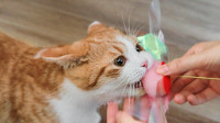 养猫最最最基础攻略, 5招教你如何征服美丽猫咪!