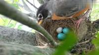 鸟妈妈回来后一脸蒙圈, 鸟蛋变成了三个, 最后的举动很让人费解