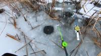 冰钓之我在芦苇里寻找鲤鱼