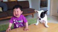 狗狗抢宝宝的饼干, 气的宝宝直哭, 下一秒狗狗的表现很惊讶!