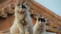 """老人常说猫不能接近死人! 只因会""""诈尸"""", 其中原因匪夷所思!"""