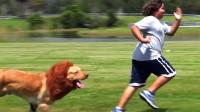 为什么人被狗追的时候, 只要蹲下就能解除危险?