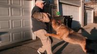 将德牧犬攻击人的镜头放慢2000倍, 可看出狗子的战斗力相当惊人!