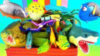 认识海洋动物和小恐龙玩具