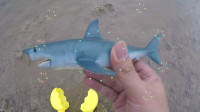 发现一只大鲨鱼, 差点没抓起来呢, 大鲨鱼长得很大哦
