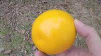 找到橙子和葡萄了, 黄澄澄的橙子与紫红色的葡萄, 小朋友们爱吃吗