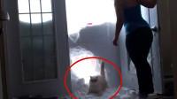 猫咪破雪入门, 帅气如你, 网友: 果然大佬的出场方式很帅气!