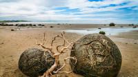 """海滩发现一堆""""石头"""",专家:已存在500万年,难道是恐龙蛋?"""