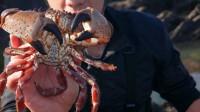 羡慕!海边岩石里螃蟹海鲜随便抓,吃一顿海鲜大餐不花一分钱