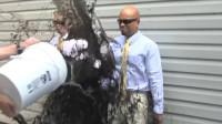 超疏水涂层有多厉害?老外将一桶墨水泼了上去,能做到滴水不沾?