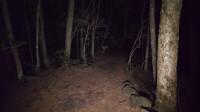 4K视频夜间在青木原森林散步