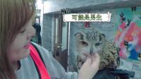 日本调戏猛禽遭猫头鹰虐 大眼萌真不是吃素的