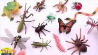 孩子们启蒙教育,奇妙的昆虫世界,小岩带孩子们认识各种昆虫们!