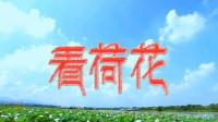 歌曲《看荷花》黄涛 MV