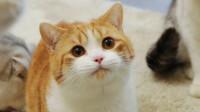 铲屎官带4只猫咪搬入豪宅,刚开始怕到钻床底,熟悉后自己躺浴缸