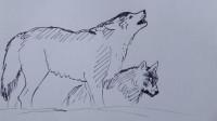 狼的速写窦老师教画画