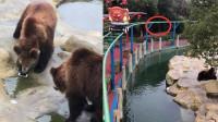 江苏一游客误将手机当苹果投喂给棕熊