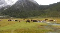 这里就是中国海拔最高的牧场,它叫洛绒牛场
