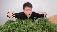 """网评最难吃的蔬菜,""""香菜""""又上榜,小伙怒吃十斤为其打抱不平"""