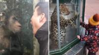 有才的网友:奇葩网友进动物园,他们绝对是来认亲的!