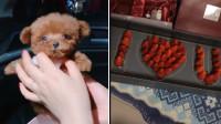 有才的网友:情人节礼物合集,真让单身狗羡慕嫉妒恨啊!
