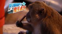 佩尼达岛美景全搜罗 情人崖路遇惹不起的猴大王!