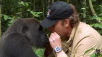 被放归野外五年的猩猩,与恩人重逢,让人意外又感动的事情发生了