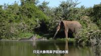 河马和大象对峙,敌不动我不动,看来动物也懂兵法