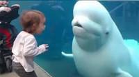 白鲸突然张嘴大吼,把小姑娘吓的跌倒在地,皮一下很开心?