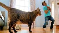 主人装死,没想到猫咪竟是这样的反应,主人:兄弟你认真的吗?