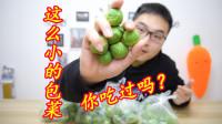 """试吃世界上最小的""""包菜""""长的跟个球似的,一口一个还挺脆"""