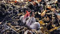 """男子野外捡到几枚""""鸟蛋"""",精心孵化后,结果却让他不寒而栗!"""