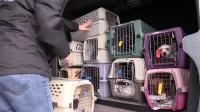 """暖心!公益组织带近百只小狗坐专机去找""""家"""""""
