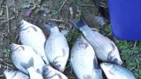 钓鱼实战149,综合分析鱼情,灵活变换钓位,终迎板鲫、翘嘴鱼情