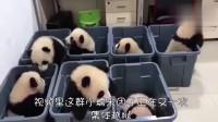 一群熊猫宝宝正集体越狱,眼看就要出狱成功,忽然谁大吼了一声!