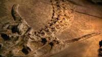 贵州发现中国龙化石,你还认为龙不存在吗?