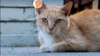 请让你的朋友都知道,如果遇到这种猫,请不要伤害