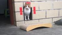 猫咪从自己的家里走了出来,这小对联看起来不错嘛
