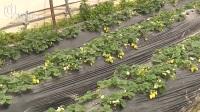 阴雨不断农田受损  蔬菜水果产量减半