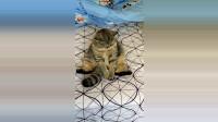 听说猫咪很容易被推到是信任主人,而在我看来,它可能时觉得躺下更舒服。