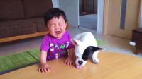 无情的狗子!抢了宝宝的饼干,我命令你立刻还给他!
