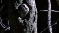 猫头鹰把蛇抓到窝里,不是吃掉而是让它做清洁工,这心机服了!