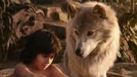 为啥母狼在捡到人类弃婴不吃,而是选择喂养,里面学问很深!